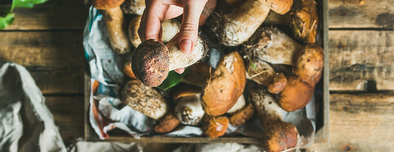 Bild zum Beitrag 'Richtig Pilze sammeln'