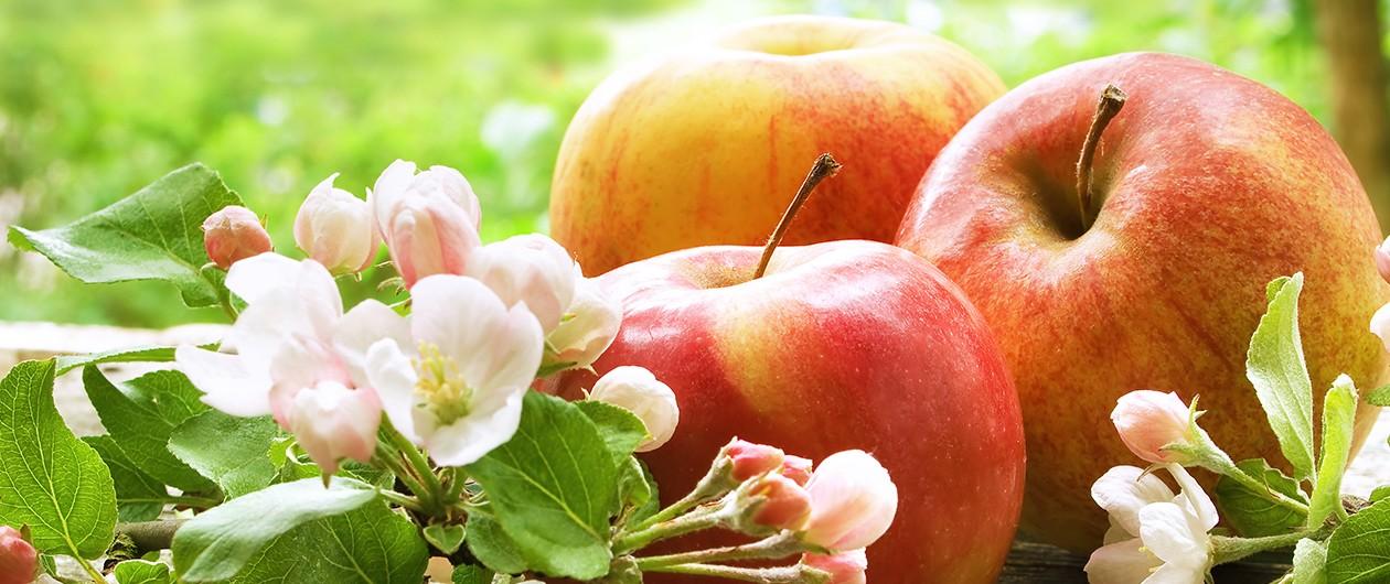 Bild zum Beitrag 'Mit Vitaminpower durch den Frühling'