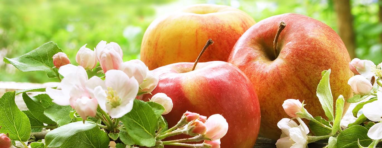 Bild zum Beitrag 'Mit Vitaminpower in den Frühling'