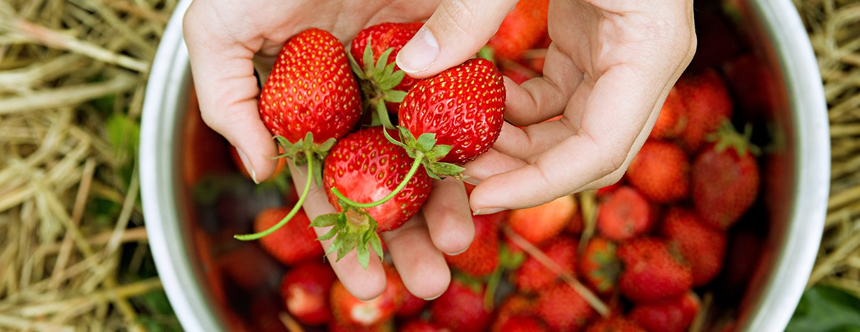 Bild zum Beitrag 'So gesund sind Erdbeeren'
