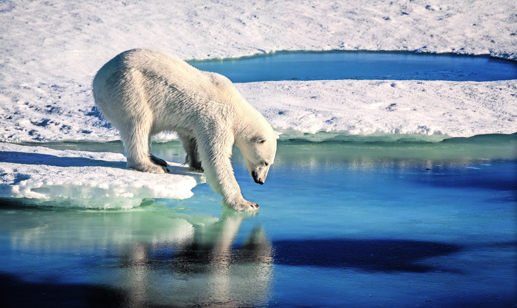 Bild zum Beitrag 'Klimaretter – Lebensretter: ein Interview'