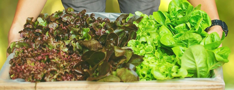 Bild zum Beitrag 'Knackiges Grün: So gesund ist Salat'