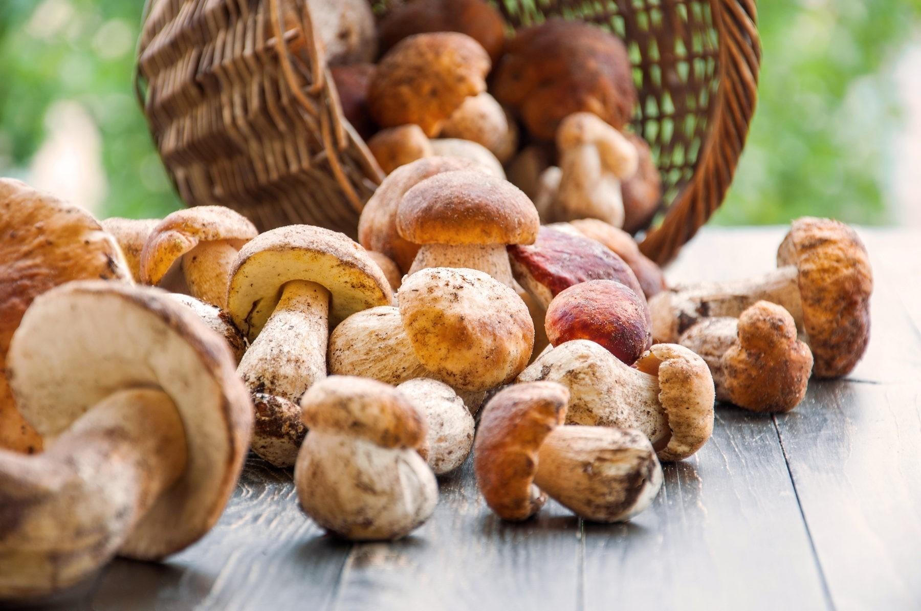 Bild zum Beitrag 'Pilze – lecker und gesund'