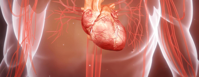 Bild zum Beitrag 'So funktioniert das Herz'