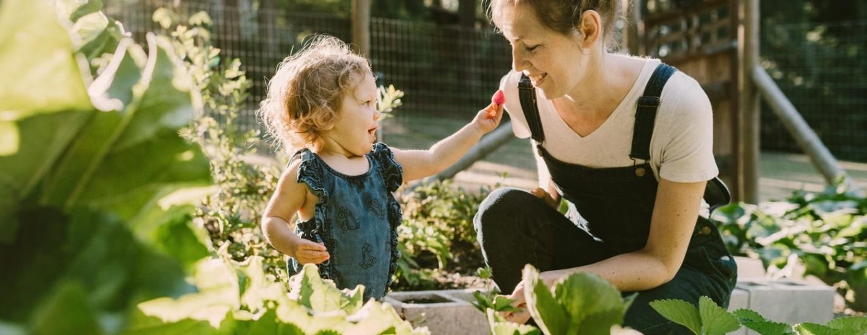 Bild zum Beitrag 'Der Traum vom Gemüsegarten'
