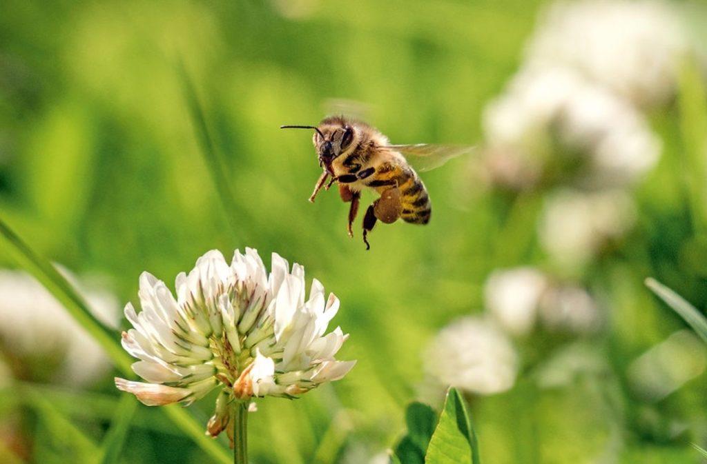Bild zum Beitrag 'Insektenschutz geht uns alle an'