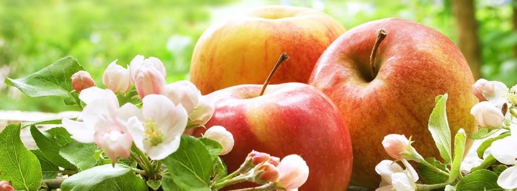 Bild zum Thema'Mit Vitaminpower durch den Frühling'
