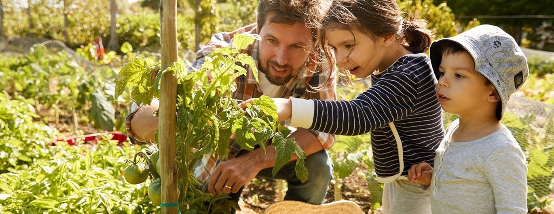 Bild zum Beitrag 'Gärtnern mit Kindern'